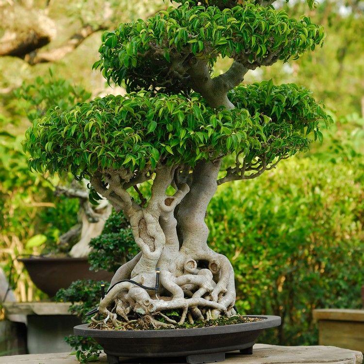 pflanzen für japanischen garten bonsai baum klein #garden #ideas ...