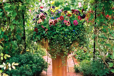 Container gardening in Calgary in 2020 Container