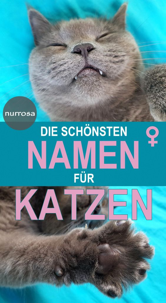 Die schönsten Namen für weibliche Katzen Liste mit Katzennamen und Tipps für die Namenssuche. nurrosa