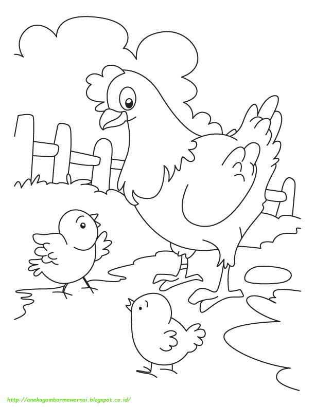 Mewarnai Gambar Ayam : mewarnai, gambar