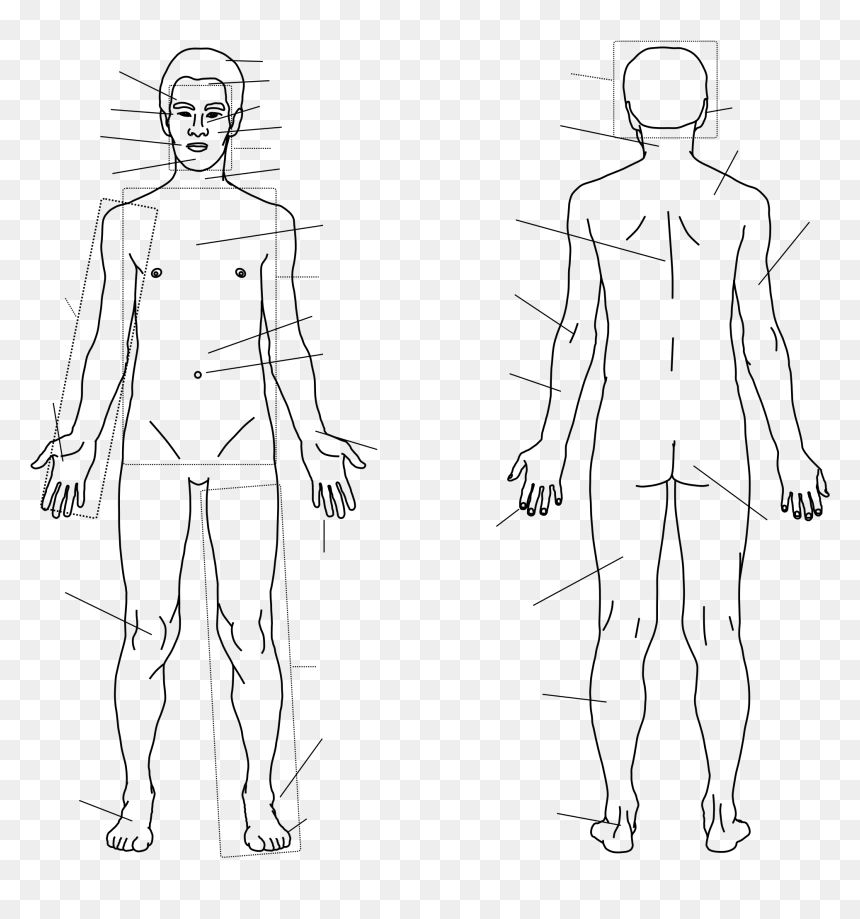 Body Outline Clipart Images Body Outline Clip Art Free Human Body