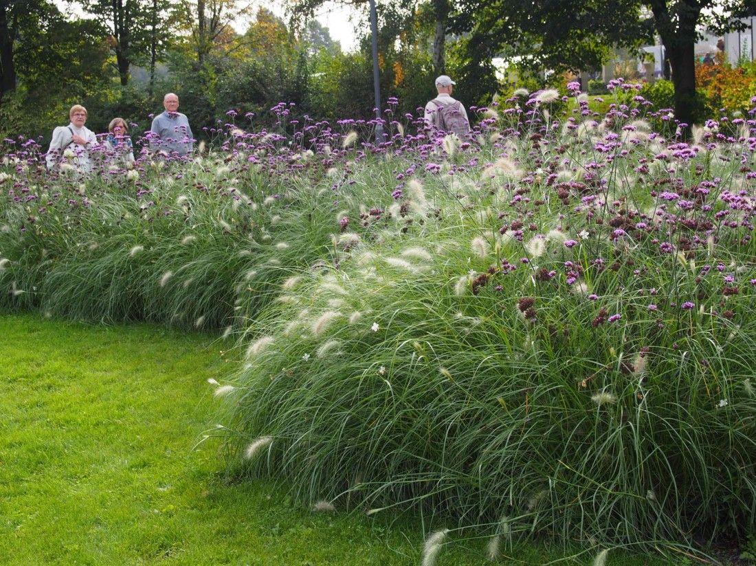 Laga gie en 2014 pflanzen pinterest stauden pelz for Pflanzengestaltung garten