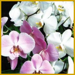 orchideen zum bl hen bringen hintergrund wissen. Black Bedroom Furniture Sets. Home Design Ideas