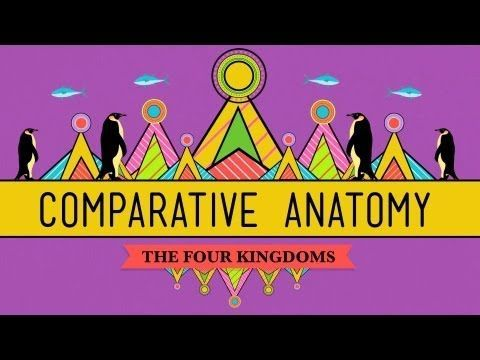 Comparative Anatomy What Makes Us Animals Crash Course Biology