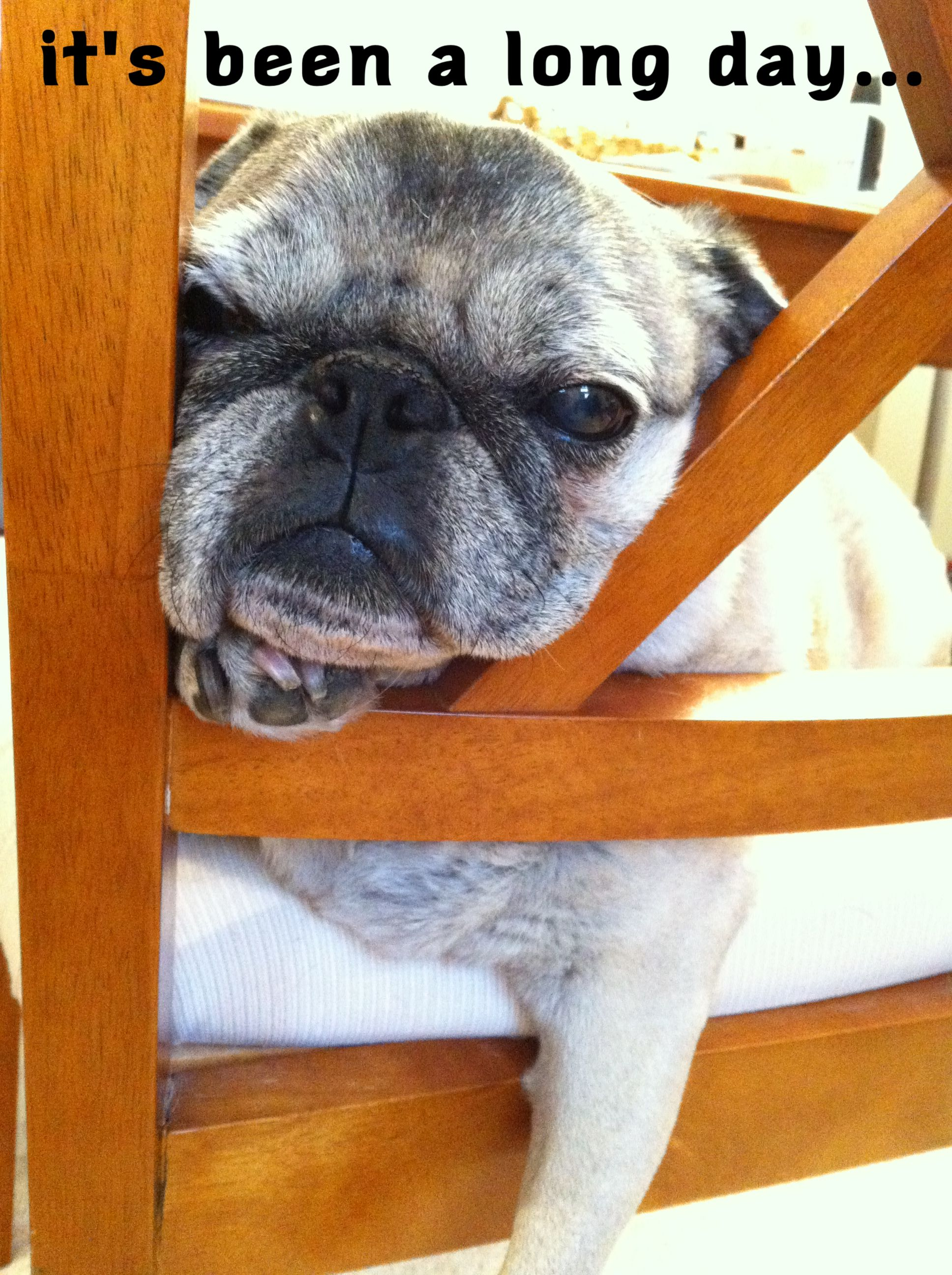 this pic says it all #pug