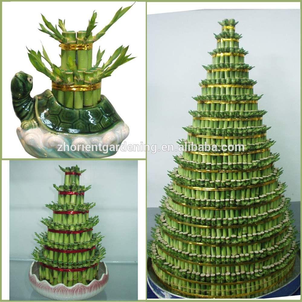 tower layered lucky bamboo air bonsai tree dracaena sanderiana