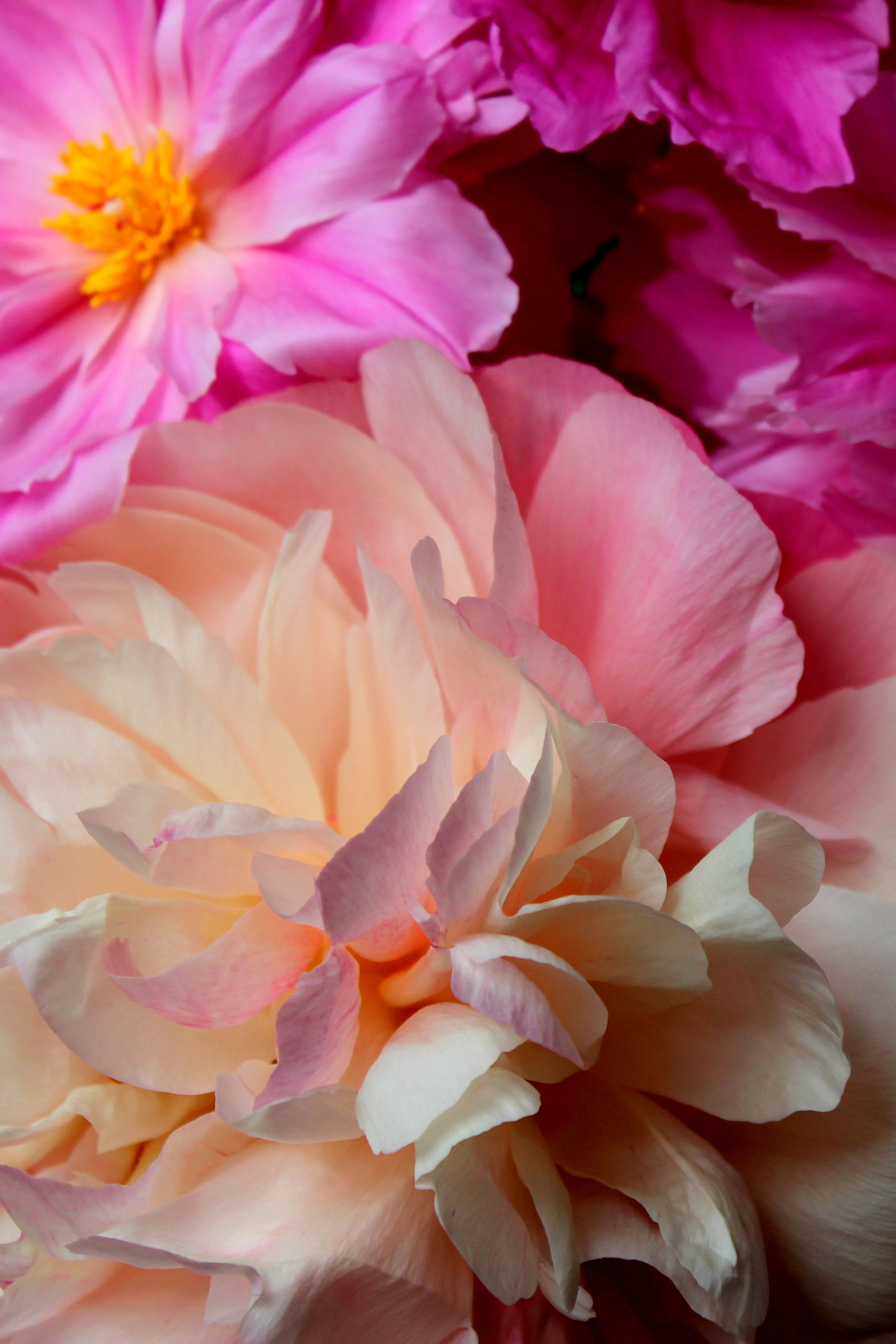 Up close and personal with #beautiful #peonies #flower ...