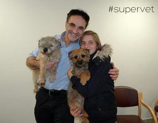 Super Vet 20 12 2016 Brown Dog Animals Animals And Pets