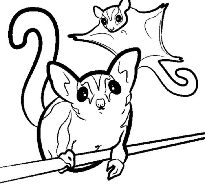 Critters Coloring Pages Petcha Sugar Glider Animal Coloring Pages Unusual Animals