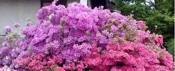 risultati immagini per piante sempreverdi da giardino resistenti ... - Piante Da Giardino Sempreverdi A Cespuglio