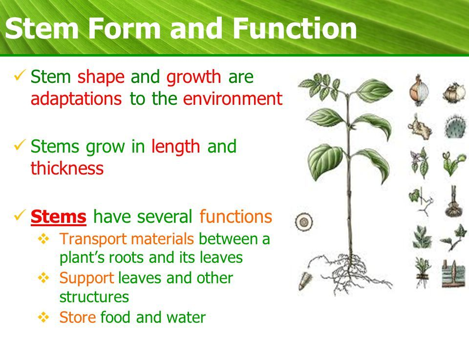 Plant Biology Form and Function. What are we learning today ...