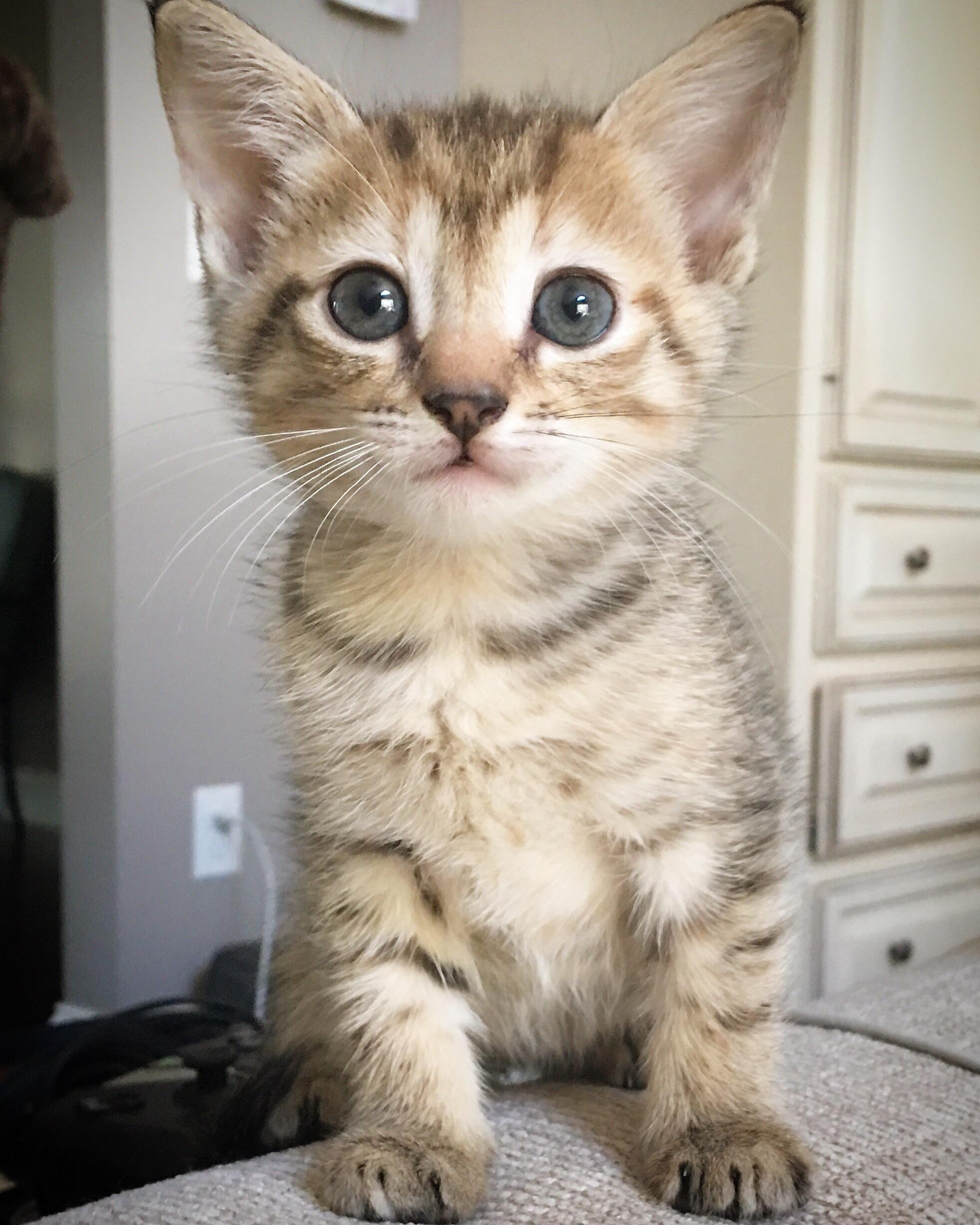 Meet Delilah the newest member of the family http://ift.tt/2xq8l6l