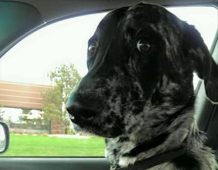 His reaction when I try to sing in the car.