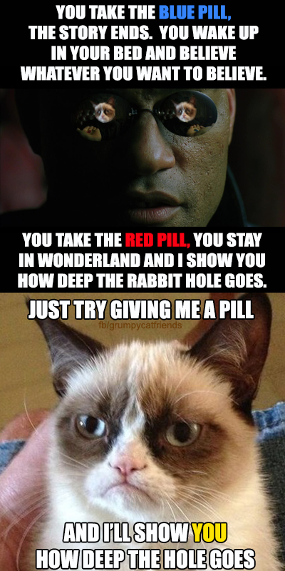 how to give a cat a pill funny