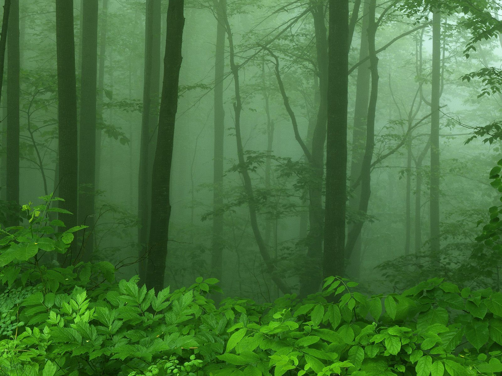 Tropical forests are some of the richest, most exciting areas on earth. Mystical Forest Shenandoah National Park National Parks Foggy Morning