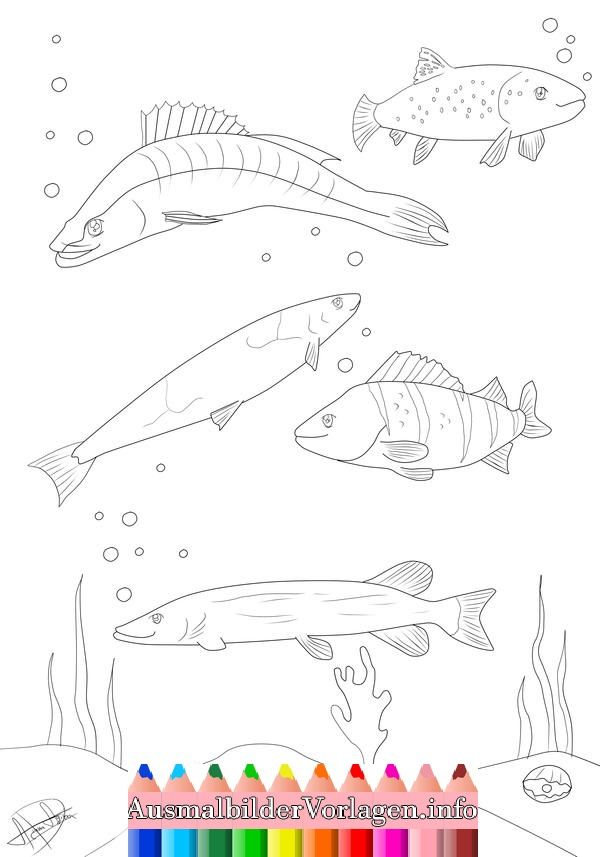 ausmalbilder fische hecht  ausmalbilder fische