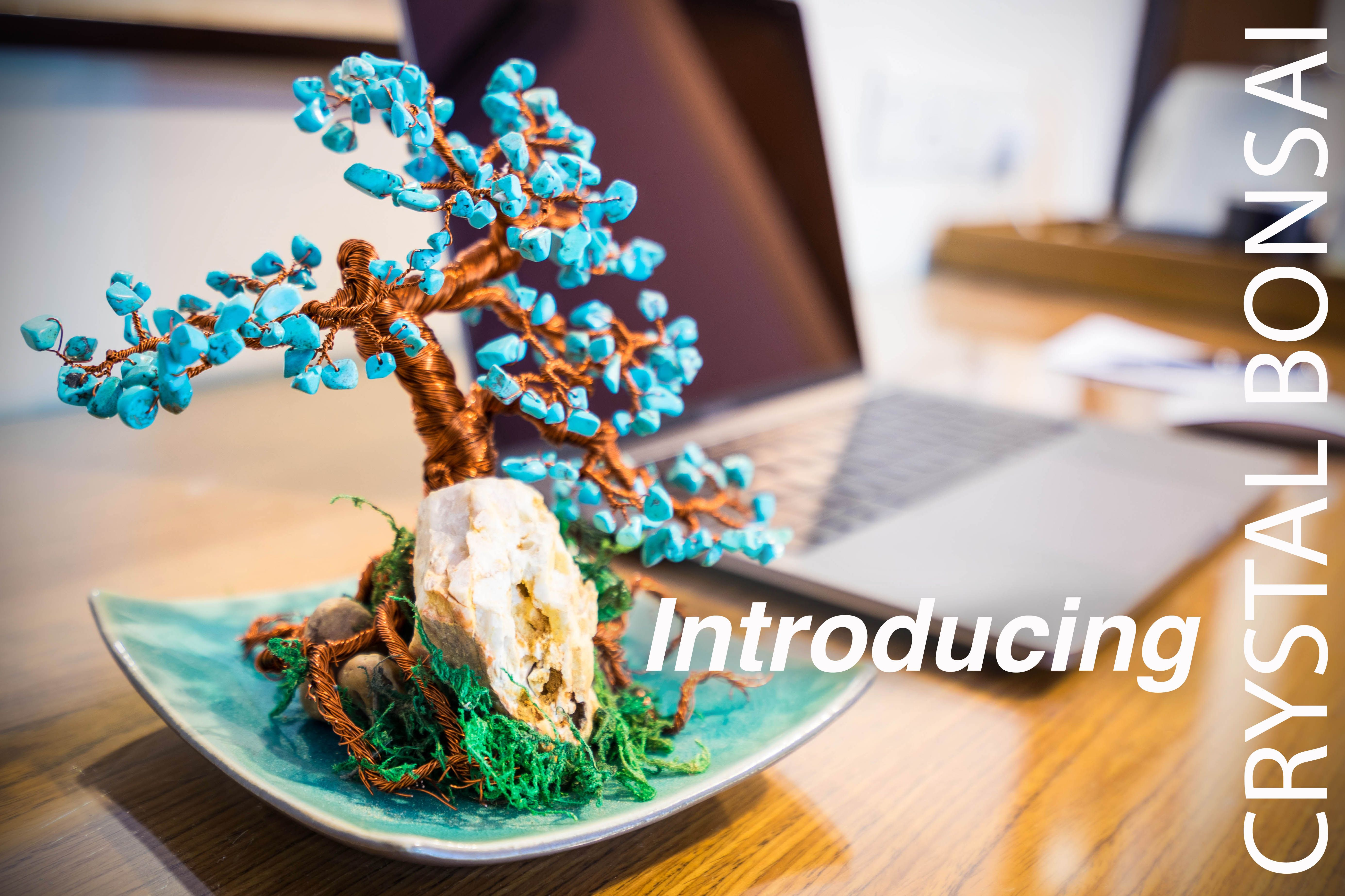 Never heard about crystal bonsai trees? Check out our website! www.crystalbonsai.com