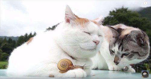お見事(笑)!足にカタツムリ乗せたネコ。もう1匹は辛抱たまらない。すると…