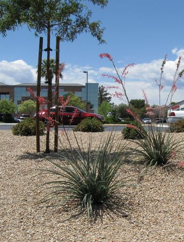 Texas Xeriscape Ideas Gravel Underlayment Fabric