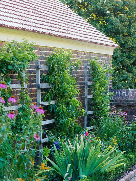 Small Garden Ideas Small gardens, Narrow garden, Garden