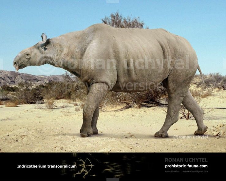 Indricotherium is a herbivore that lived in the forests of ...