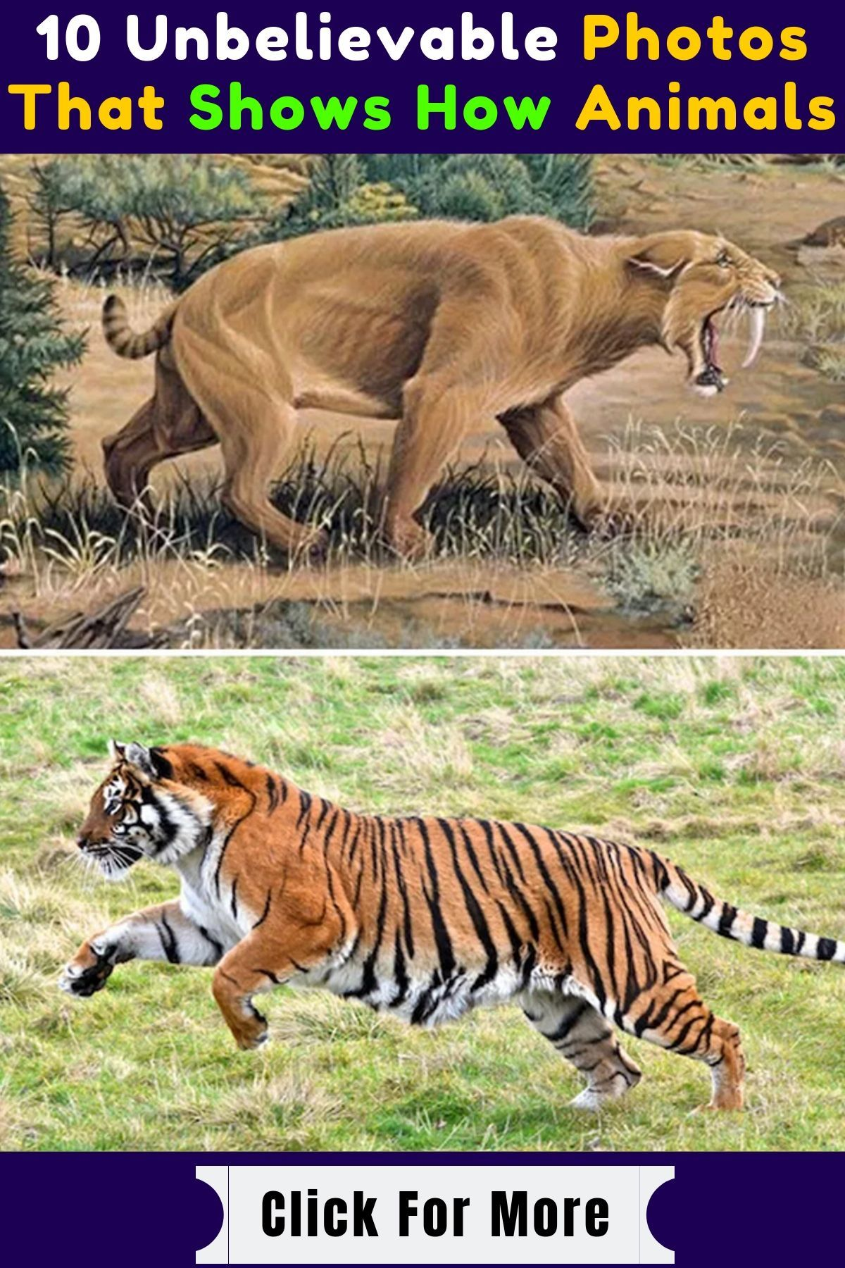 10 Unbelievable Photos That Shows How Animals Have Evolved Over