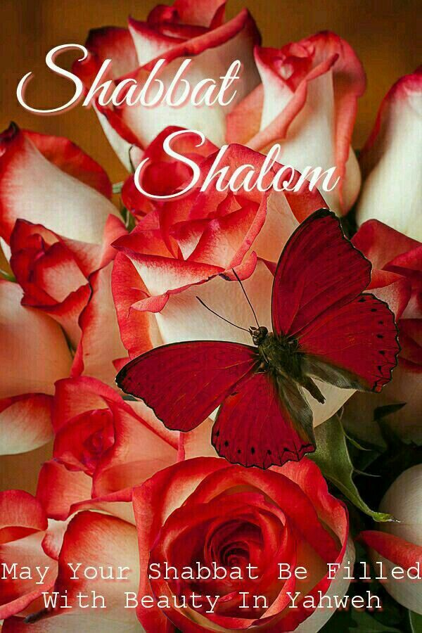 shabbat shalom things i like pinterest mensajes cristianos