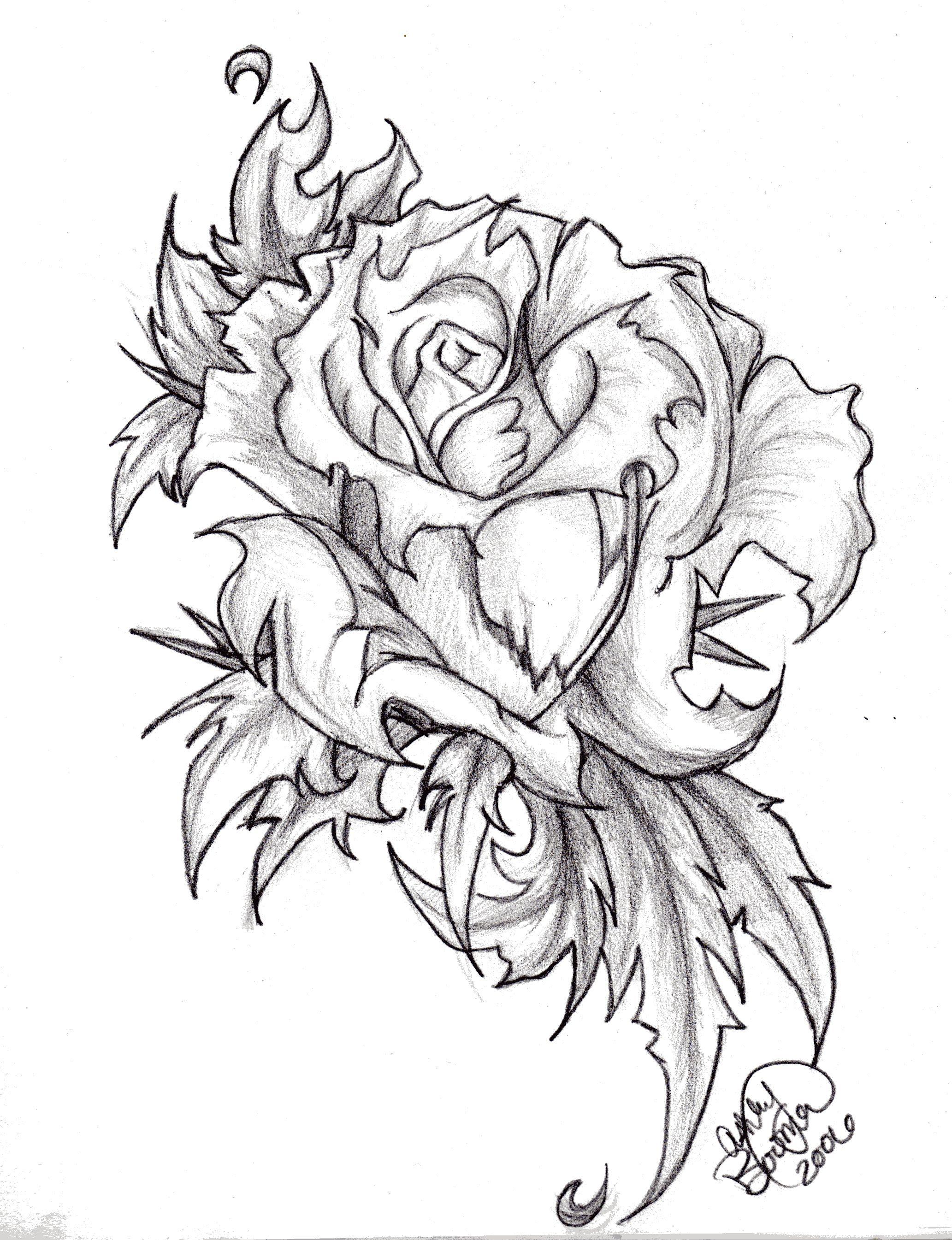 drawings of roses - HD2065×2690