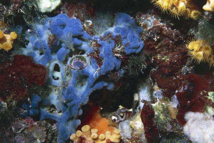 How To Stop Red Slime Algae In Your Aquarium Red Slime Algae Slime