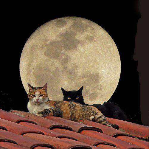 Gatos na lua cheia