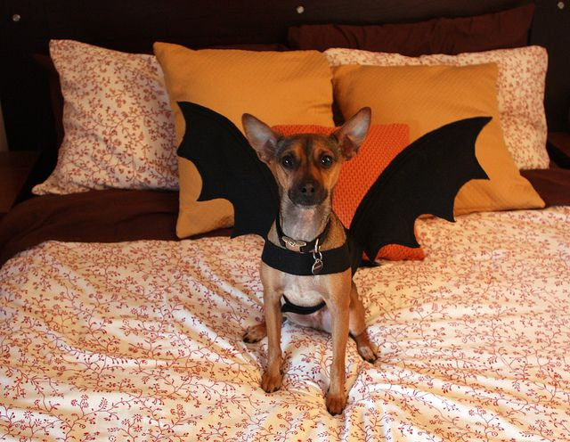 How To Make Bat Wings For A Dog Costume Or Any Costume Really We