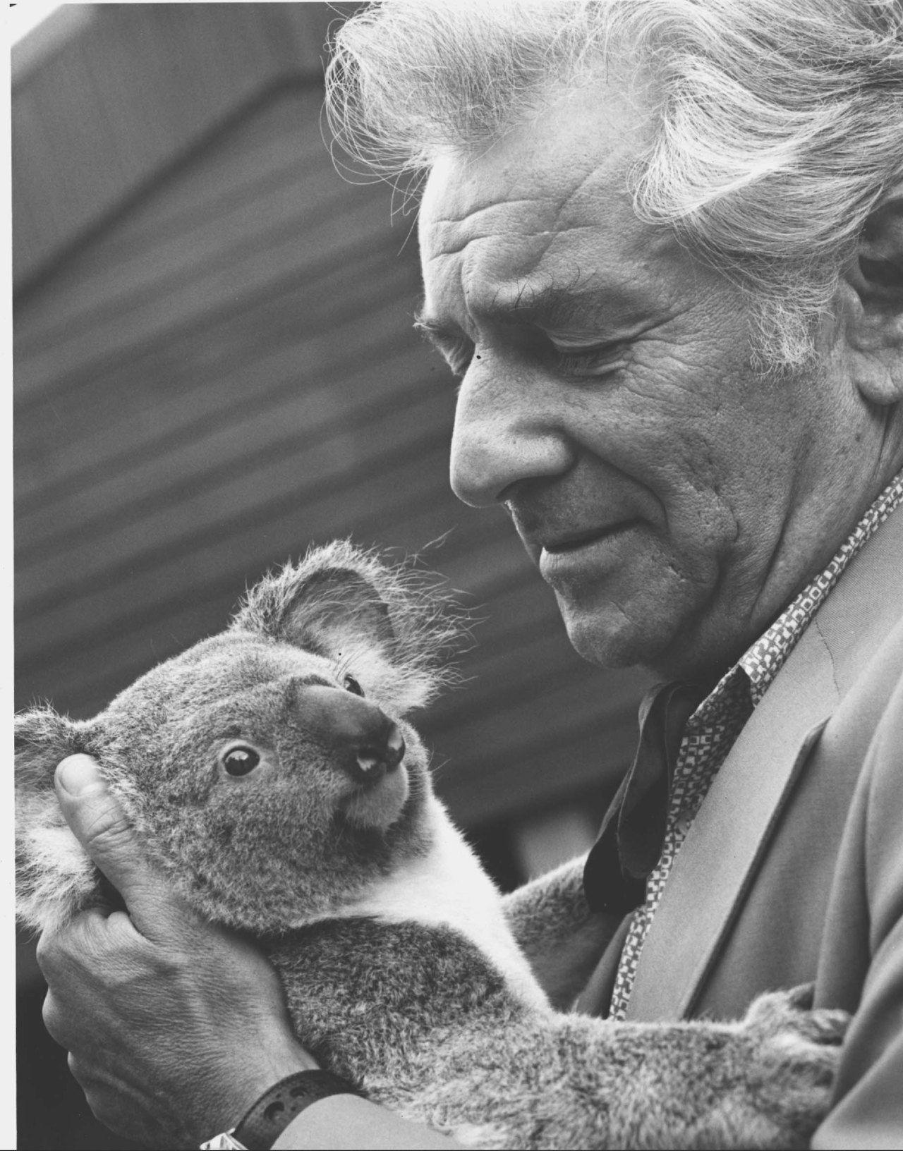 nyphil lenny down under leonard bernstein holding a koala bear nyphil lenny down under leonard bernstein holding a koala bear