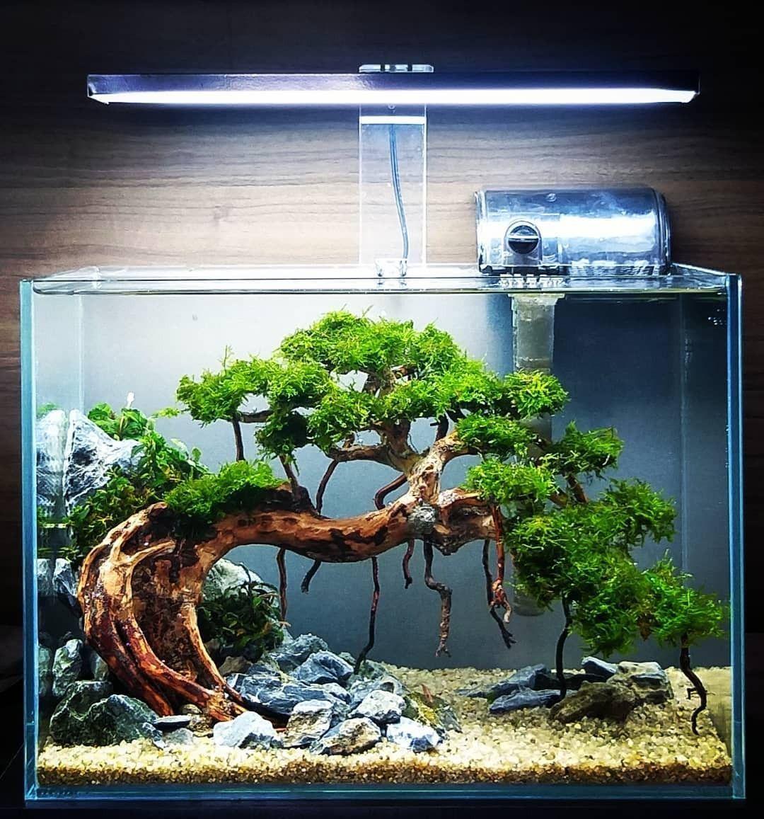 It is very amazing bonsai tank aquascape !! in 2020 ...