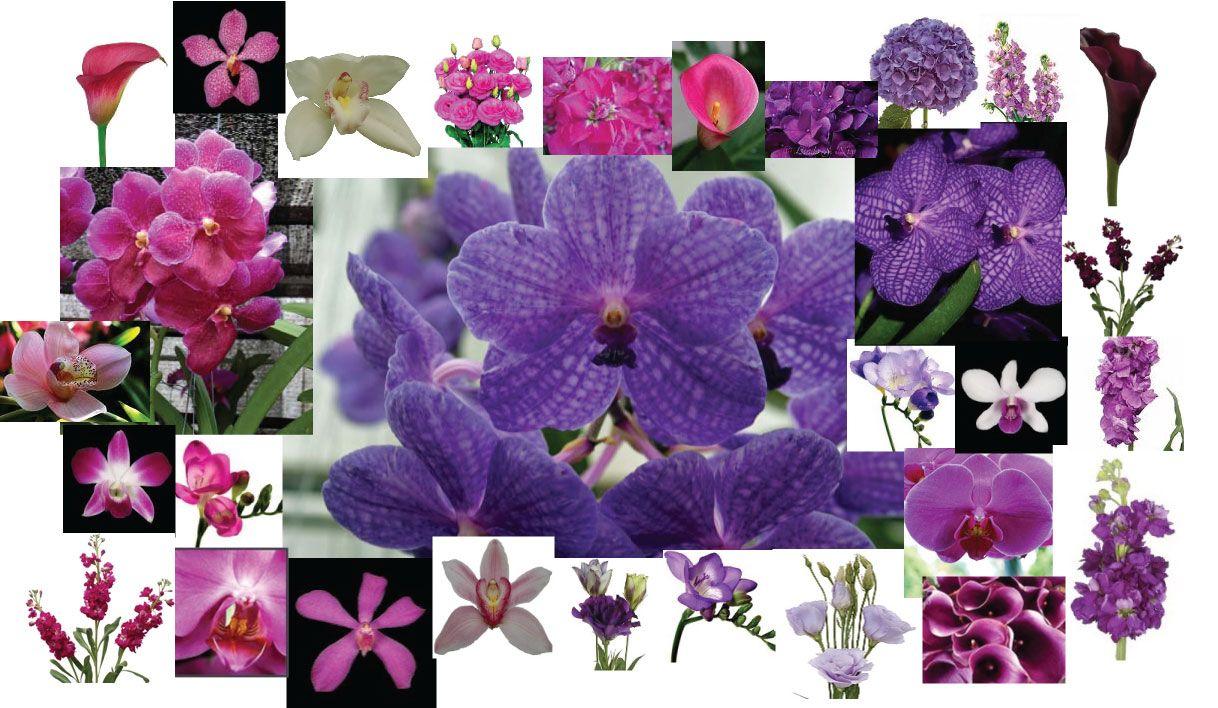 Google Image Result for http://kiokreations.files.wordpress.com/2009/01/floral-palette-kio.jpg