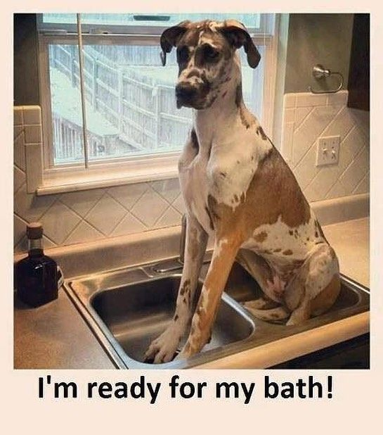 Instagram Photo By Vir Brandi May 12 2016 At 10 55am Utc Funny Animal Pictures Funny Animals Funny Dog Pictures