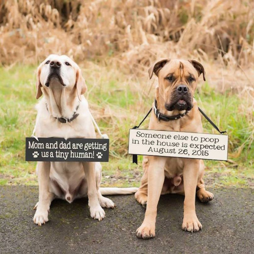 Darling Dogs Cleverly Announce Family News With Crafty Signs