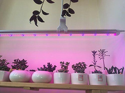 1m 5050 Waterproof Led Strip Plant Flower Growing Grow Light Red Blue 41 Dc 12v Details Can Be Found By Grow Lights For Plants Planting Flowers Grow Lights