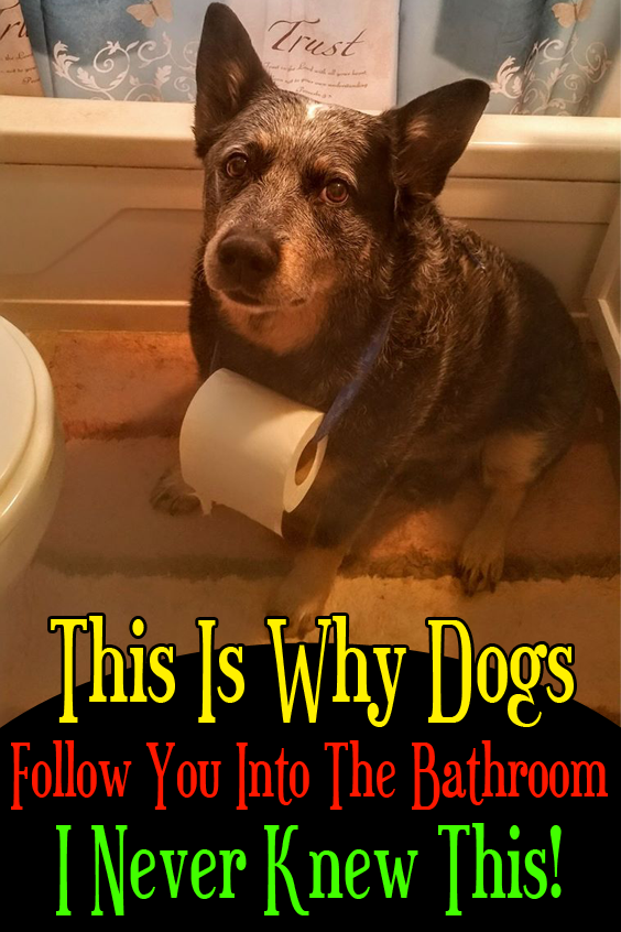 This Is Why Dogs Follow You Into The Bathroom I Never Knew This In 2020 Dogs Cute Puppies Puppy Dog Eyes