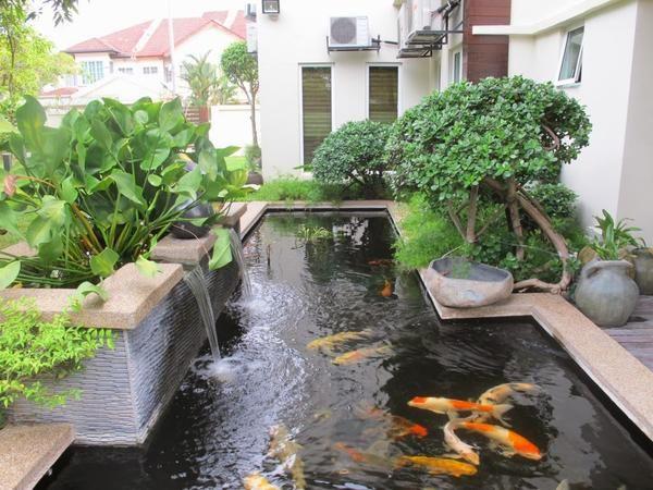 Kolam Ikan Minimalis 6 Kolam Ikan Taman Vertikal Taman Air