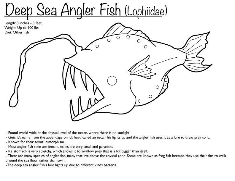 Deep Sea Angler Fish Coloring Page Angler Fish Fish Coloring Page Angler Fish Drawing