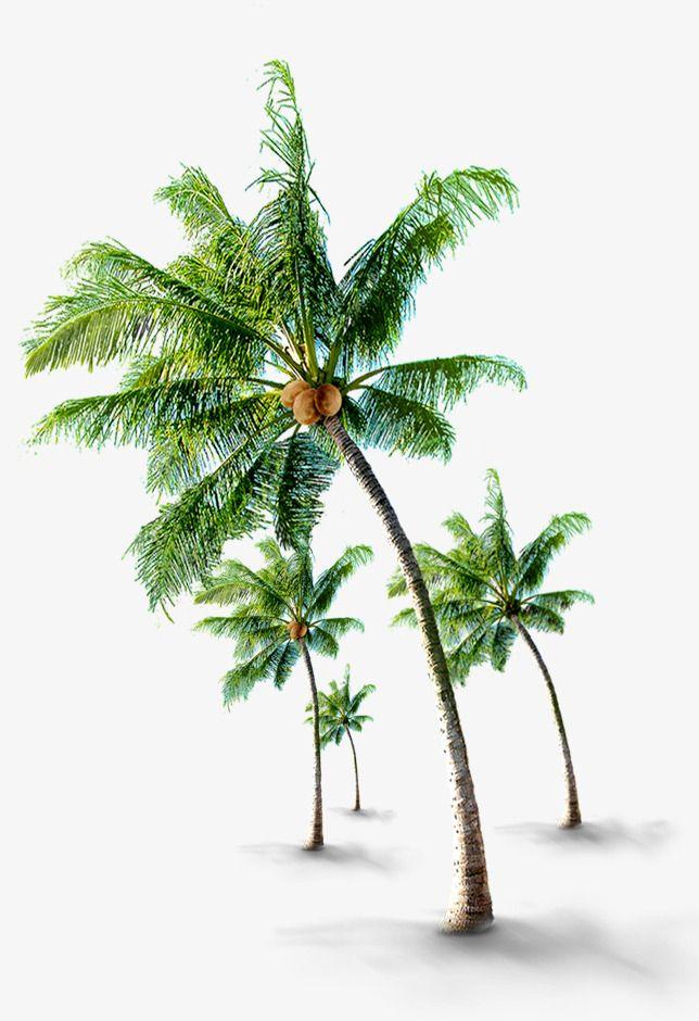 Tropical Coconut Trees Trees Tumblr Oak Tree Tattoo Oak Tree Tattoo Small