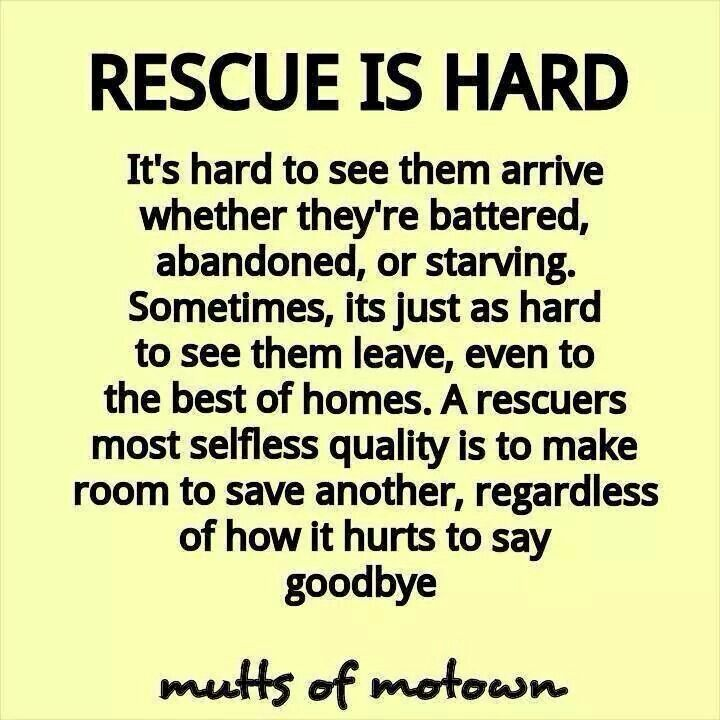 Pin By Sante D Or Foundation On Rescue Why We Do It Rescue Quotes Rescue Dog Quotes Animal Rescue Quotes