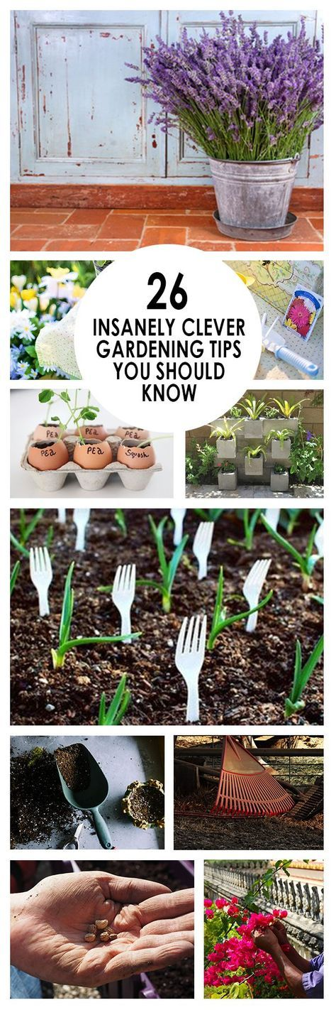 26 Insanely Clever Gardening Tips You Should Know Just so YOU Know