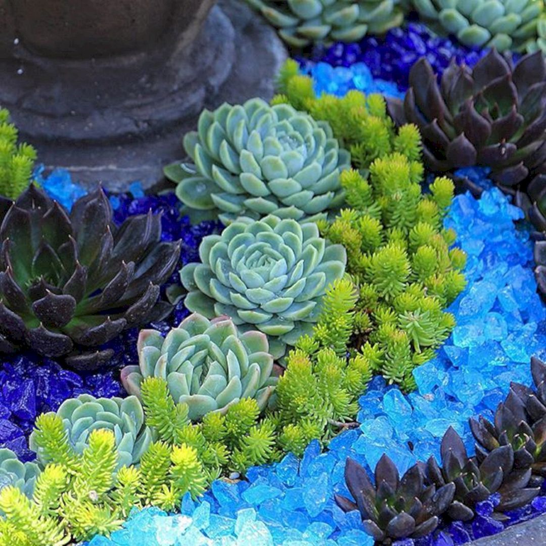 Awesome Container Garden With Succulents: 45+ Best Design