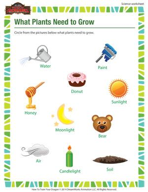 What Plants Need To Grow Free Science Worksheet For 1st Grade Kids Science Worksheets Free Science Worksheets Science Kindergarten Worksheets