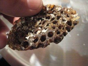 rendering beeswax from brood comb Dark honeycomb beeswax ... - photo#26