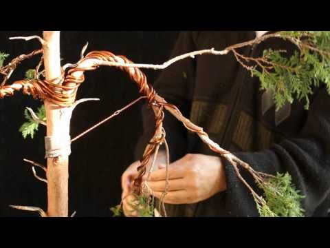 Stephen Cipreste Hinoki Youtube With Images Bonsai