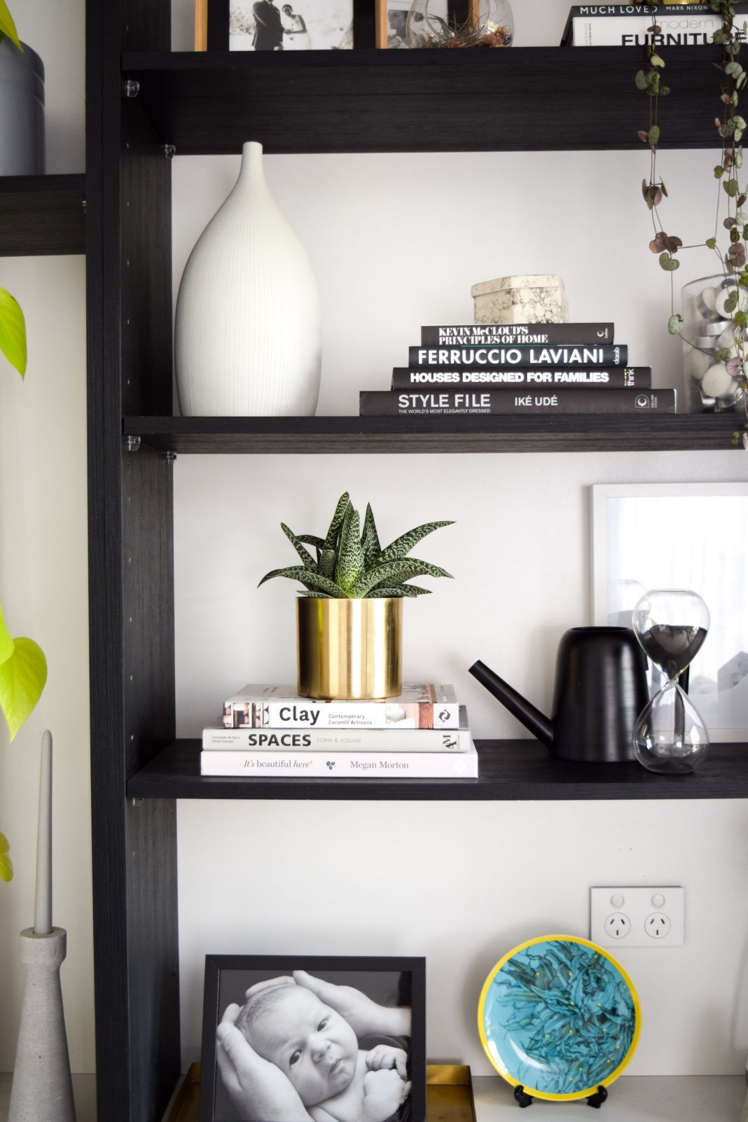 Top trending indoor plants and where to use them house sales
