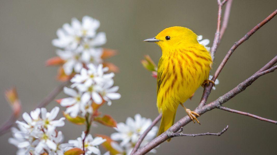 Bird academy the cornell lab courses tutorials videos