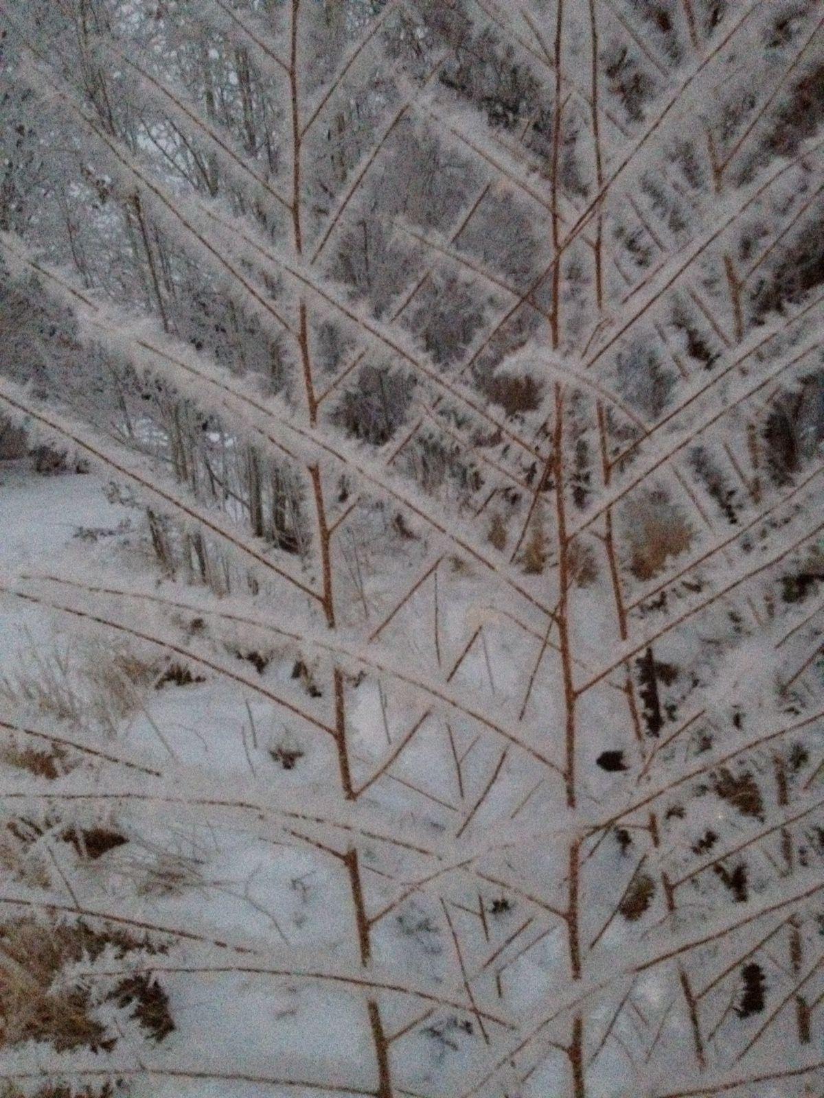 Winter in the garden at BonaTerra Farm